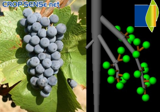 CROP.SENSe.net: modeling and reconstruction of grapes